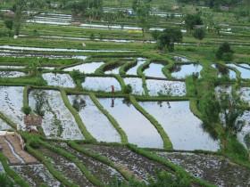 rice-fields-tirta-gangga-balidiversity-explore-natural-bali