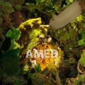 Amed Dive Sites