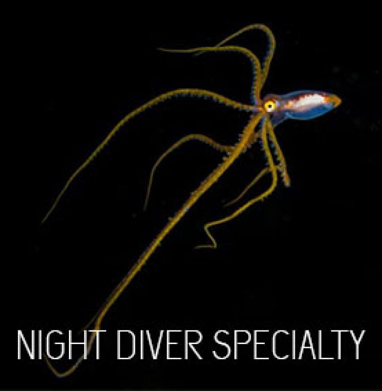 padi-night-diver-specialty