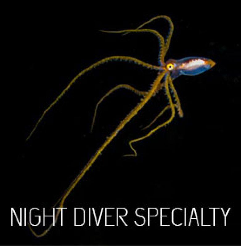 padi-night-diver-specialty