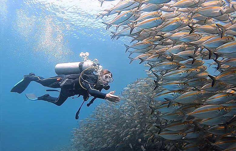 Étudiant PADI Open Water en formation à la croisière à travers un banc de poissons géant avec Bali Diversity à Amed.